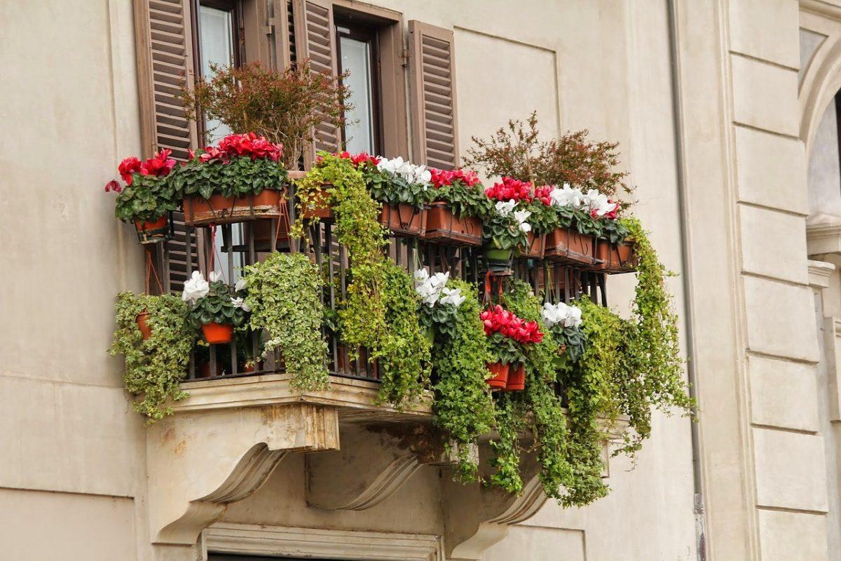 Семь вьющихся растений для балконов - businesshub.com.ua.