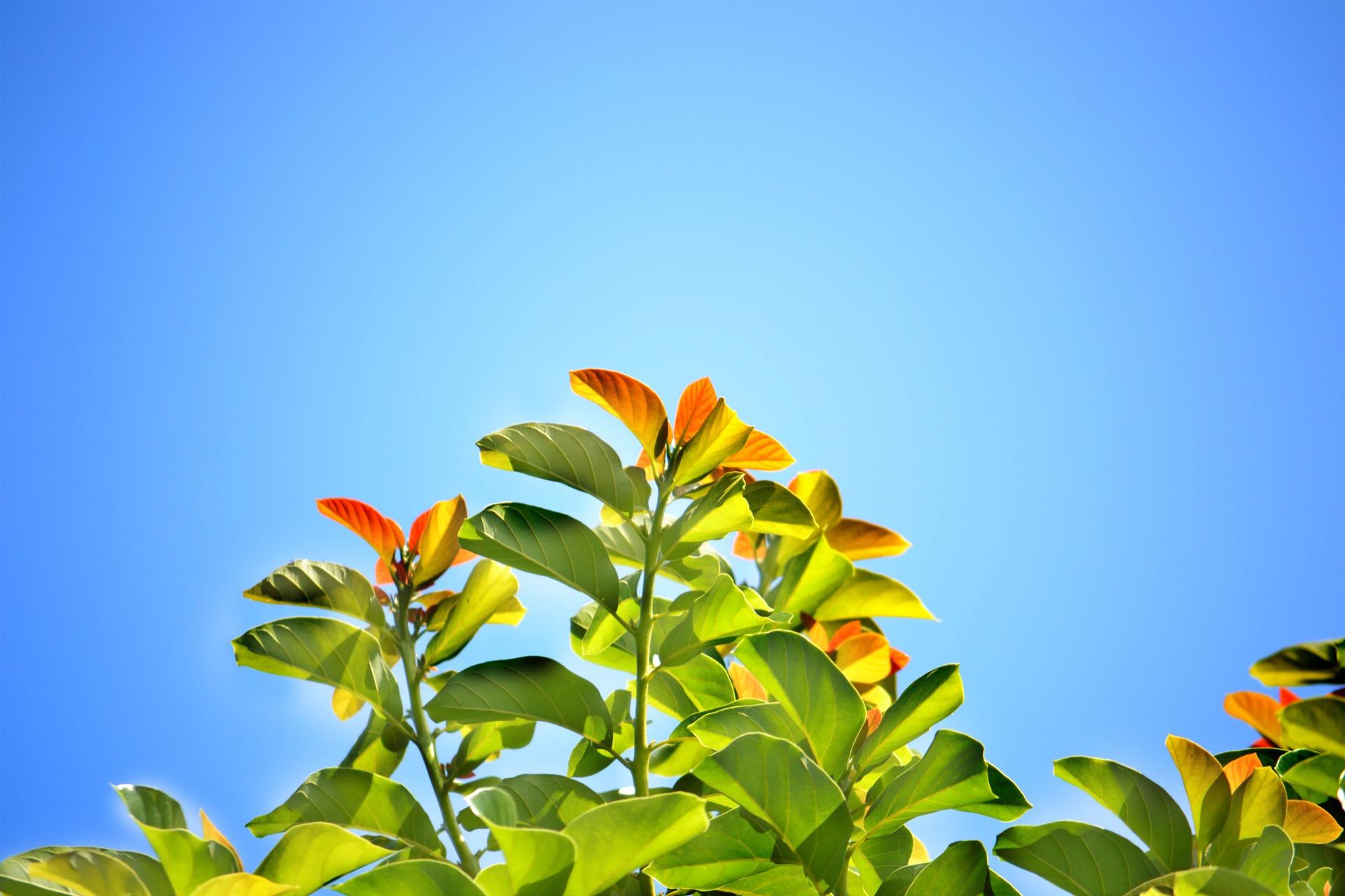 leaves-241701